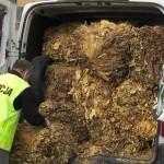 Opel Movano po dach wypełniony 700-kilogramami nielegalnego suszu