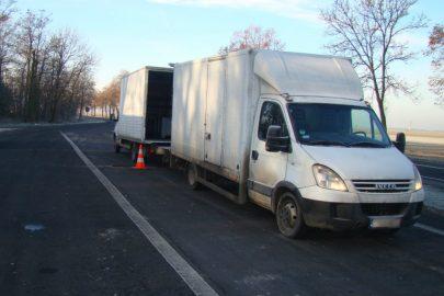 Iveco Daily z transportem karmy dla zwierząt w rękach ITD