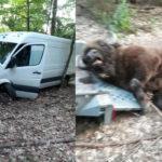 Volkswagen Crafter wjechał w żubra na trasie Czaplinek-Mirosławiec