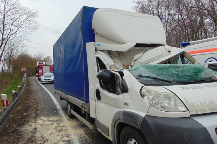 Na kabinę Fiata Ducato spadł konar – kierowca przeżył